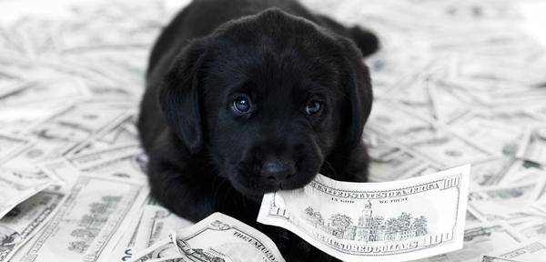 Puppy-nomics
